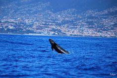 Cheaptrip - Carpe Diem - Carpe Viam - Экологический тур – Farmstay и бутик отели & наблюдение за китами и дельфинами на Мадейре