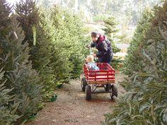 Underwood Family // Farm Trees on the Farm & Visits with Santa // When:  November 27 - December 18