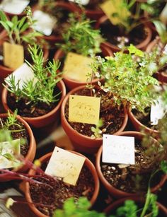 Organic Herb Wedding Favors...could use any small plant or you could start growing from seeds now. I could help. Tiny pots would be less than $1.  Print cards on computer