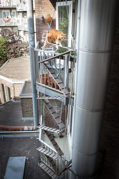 Best Coolest Cat Stairs Ever Spiral Staircase Winding Up 3 400 x 300
