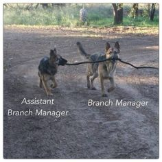 Assistant TO the branch manger.