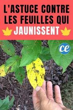 Garden Lamps, Permaculture, Agriculture, Plus Jamais, Projects To Try, Vegetables, Miracle, Ph, Gardening