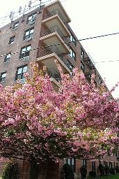 Affordability is possible  at under $200,000 in New York City, these Grant City, Staten Island condos put you near some of the area's best transportation, shopping, parks and more... all within walking distance.