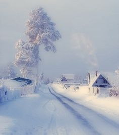 bathed in winter white