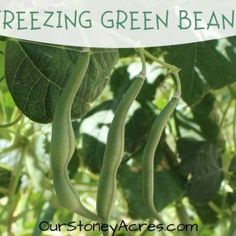 Growing Beets in Your Backyard Garden - Our Stoney Acres