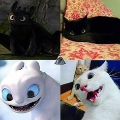 Funny Animal Jokes, Cute Funny Animals, Cute Baby Animals, Funny Disney Jokes, Crazy Funny Memes, Cute Toothless, Dragon Memes, Cute Dragons, Cute Animal Pictures