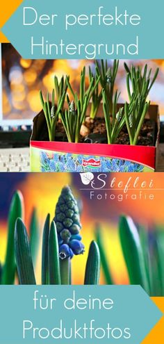 a simple DIY and low budget photo tip. So you glamor super easy the perfect background in your photo Photo Tips, Super, Photography Tips, Easy Diy, Photo Wall, Budget, Simple, Plants, Perfect Photo