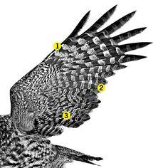 Owl Wings Hold the Secrets for Noise-Canceling Tech - Popular Mechanics