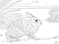 Marsh Rabbit Coloring Page From Rabbits Category Select 25655 Printable Crafts Of Cartoons Nature Animals Bible And Many More