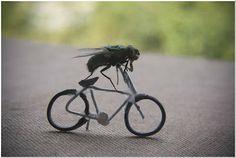 Skolestuen: På eventyr med en flue - Sjove billeder som kan bruges som billedforlæg til skriveøvelser
