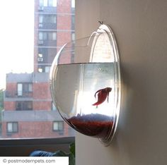 betta fish tank... I have one of these! So hard to change the water. But so cool!