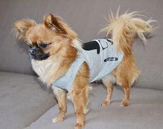 Chihuahua look Oh Pacha