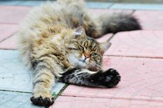 Why Do Cats Stretch So Much?If there were an Olympic event for stretching, cats would win gold. They're constantly stretching their muscles, likely for many of the same reasons that people do, experts told Live Science.
