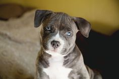 I have the cutest puppy ever Help this girl with her puppy    https://www.facebook.com/photo.php?fbid=475001805900973