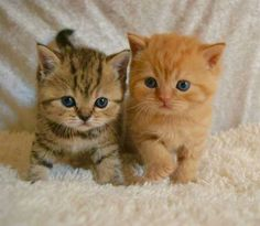 This group is for anything about cats. All cat lovers are welcome. Cute Little Kittens, Cute Baby Cats, Cute Little Animals, Cute Kittens, Beautiful Kittens, Pretty Cats, Baby Animals Pictures, Funny Animals, Cutest Kittens Ever