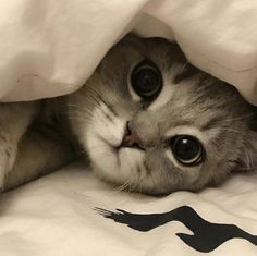 Awesome cute cats detail are readily available on our website. Take a look and you wont be sorry you did. Cute Cats And Kittens, Baby Cats, I Love Cats, Kittens Cutest, Pretty Cats, Beautiful Cats, Animals And Pets, Funny Animals, Cute Cat Memes