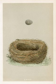 F.O. Morris Nests and Eggs Prints 1853