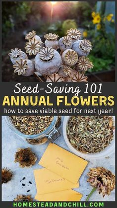 Saving flower seeds is fun, rewarding, and easy to do. Who doesn't love free seeds? Come learn how to seed-save from annual flowers like zinnia, calendula, sunflowers and more - to keep the biggest and most beautiful specimens in your garden to gift, swap, or plant next year! #seedsaving #saveseeds #seeds #flowers #flowergarden #gardening # Garden Seeds, Planting Seeds, Garden Plants, Fall Planting, Garden Grass, Fruit Garden, Edible Garden, Indoor Plants, Gardening For Beginners
