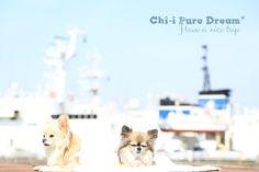 Chi-i Pure Dream