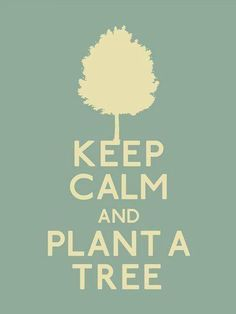 ¡Plant a tree today!