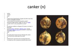 canker meaning #gre #cat #vocabulary
