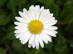 *-f* Plants, Flower, Photos, World, Planters, Plant, Planting, Cake Smash Pictures, Flowers