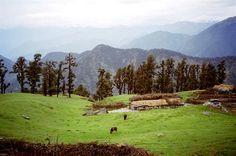 Chopta(Uttaranchal)
