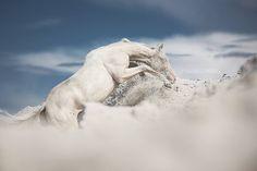 www.pegasebuzz.com | Equestrian photography : Pola Gałczyńska.