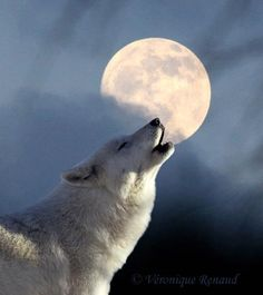 Howling at the Moon.