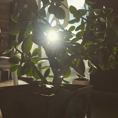 Aprovechando el solecito#lasrecetasdeisa #madewithcariño #avila