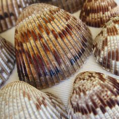 What does ?cockle-shell? mean?