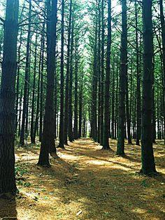 Dark forest trail..