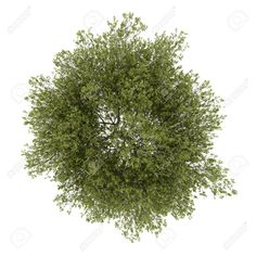Tree Top View Vector Png