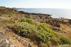 Ocean view from Lanzarote. /Brzeg oceanu na Lanzarote to nie tylko nagie skały. Visit my blog: http://tygrysiaki.pl/