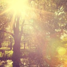 The invention of light - Fine art landscape photograph - Sun Flare in the forest by Irene Suchocki