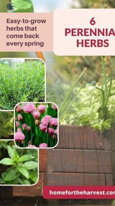 Herbs Garden, Organic Gardening Tips, Hobby Farms, Flowers Perennials, Edible Garden, Balcony Garden, Amazing Flowers, Garden Planning, Backyard Landscaping