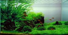 Freshwater Aquariums Plr Articles - Download at: http://www.exclusiveniches.com/freshwater-aquariums-plr-articles.html #ExclusiveNiches #Aquariums #Plr #Articles #Marketing #Content #ContentMarketing