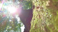 川越氷川神社へ✨✨✨感謝を込めて 。。。|孔雀と太陽の虹色の旅✨✨