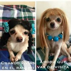 59 ideas memes chistosos mexicanos de perros for 2019 Funny Spanish Memes, Spanish Humor, Memes Funny Faces, Funny Dog Memes, New Memes, Dankest Memes, Funny Animal Pictures, Funny Images, Funny Pics