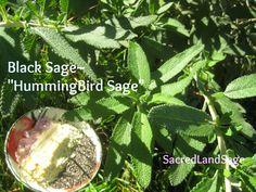 Cali Fresh Sage & crystals for your Sacred Space by SacredLandSage Sage Bush, Sacred Garden, Wood Resin, Salvia, Hummingbirds, Large Black, Cleanse, Plant Leaves, Seeds