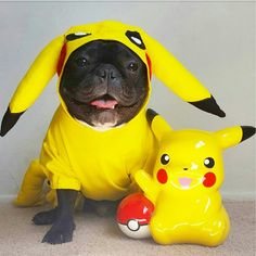 Pikachu!  French Bulldog