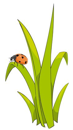 Coccinelle sur brin d-herbe - Ladybird on blade of grass. Grass Drawing, Garden Drawing, Wall Drawing, Grass Clipart, Halloween Alice In Wonderland, Christmas Clipart Free, Woodland Nursery Girl, Social Media Art, Background Design Vector