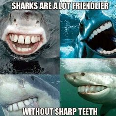 Terri's Teaching Treasures: Shark Week Blog Hop