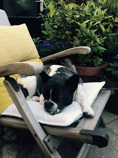 Pippa lazy evening, French Bulldog ♥