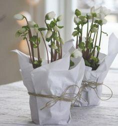 cache-pot-realise-avec-papier-emballage-et-ficelle