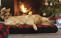 Supportive memory foam pairs with eye-catching style in this cushy Dream Lounger dog bed.