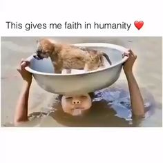 Animals - Amazing People Who Risked Their Own Lives To Save Animals animals animallovers Cute Funny Animals, Cute Baby Animals, Funny Cute, Animals And Pets, How To Save Animals, Save Animals Quotes, Cute Animal Memes, Cute Animal Videos, Animals Amazing