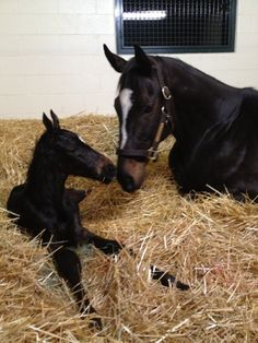 Another picture of Zenyatta and her colt!
