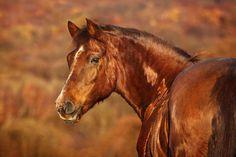 (96) Passion Equestre - Timeline
