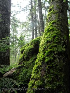 Maines Mossy Forest photo print. $15.00, via Etsy.